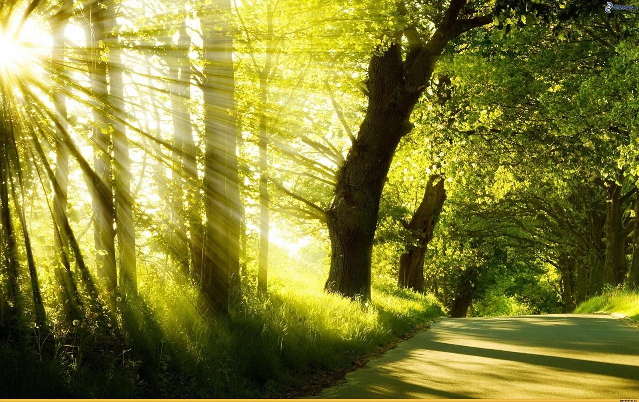 120 brushes de Rayos de Sol y Luz para Photoshop