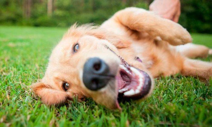 Imagenes de perros diseños creativos portada
