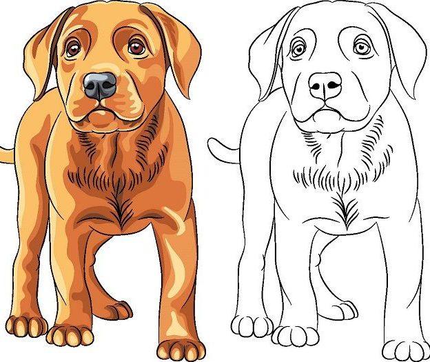 Las Mejores Imagenes De Perros Perritos Gratis