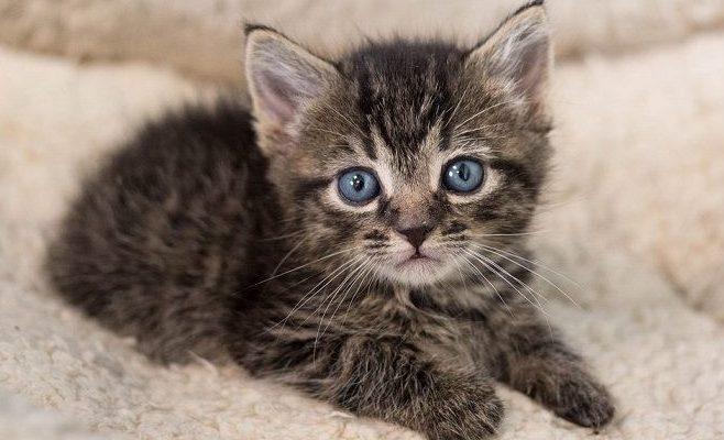 imagenes de gatitos tiernos www.diseñoscreativos.com portada