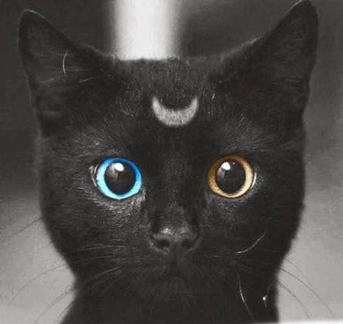 imagenes de gatos negros www.diseñoscreativos.com portada