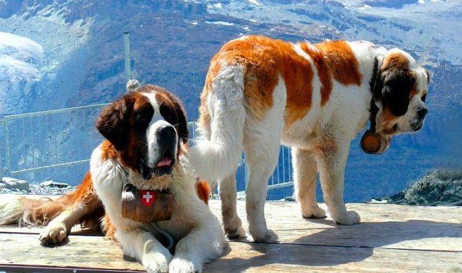 imagenes de perros grandes diseños creativos portada