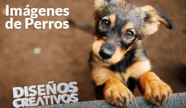 las Mejores Imágenes de Perros y Perritos para Descargar